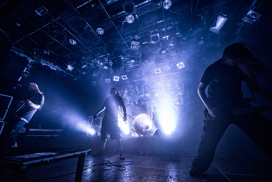 DSC_2011-02_AMF_Decapitated